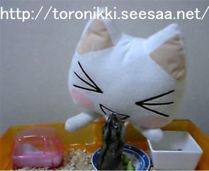 猫と鼠3.jpg