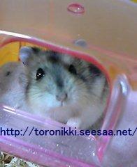 猫と鼠4.jpg